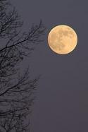 betrunkener Mond