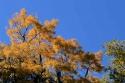Herbstsonntag